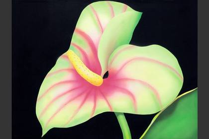 Photo of: Obak'i Anthurium