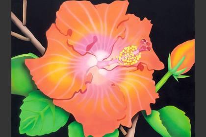 Photo of: Orange Hibiscus