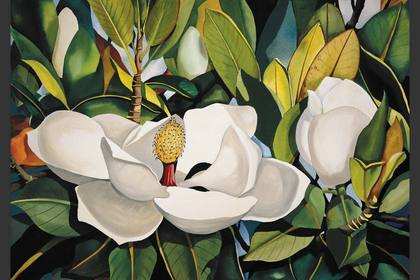 Photo of: Sweet Hawaiian Magnolias