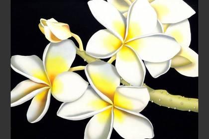 Photo of: White Plumeria