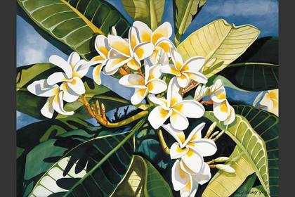 Photo of: Yellow & White Plumeria