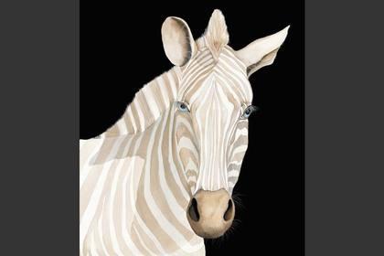Photo of: Zebra Head