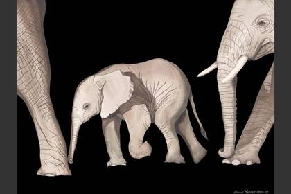 Photo of: Elephant Walk