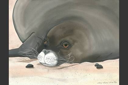 Photo of: Moloka'i Monk Seal